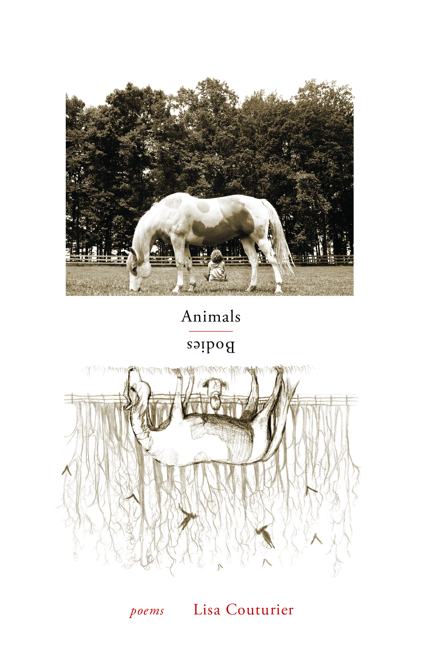 Animals / Bodies